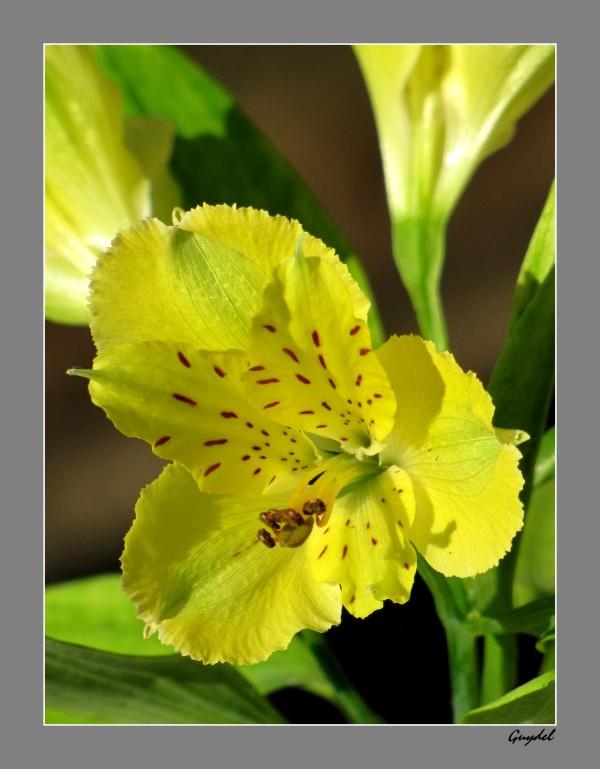 ? Sympathique petite fleur jaune !