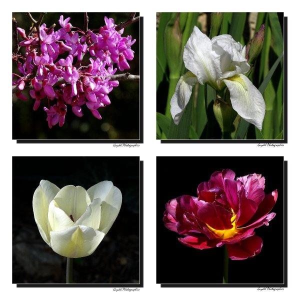 Fleurs d'Avril