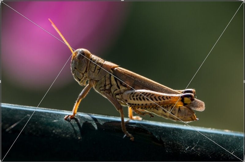 grasshopper triangle composition v2