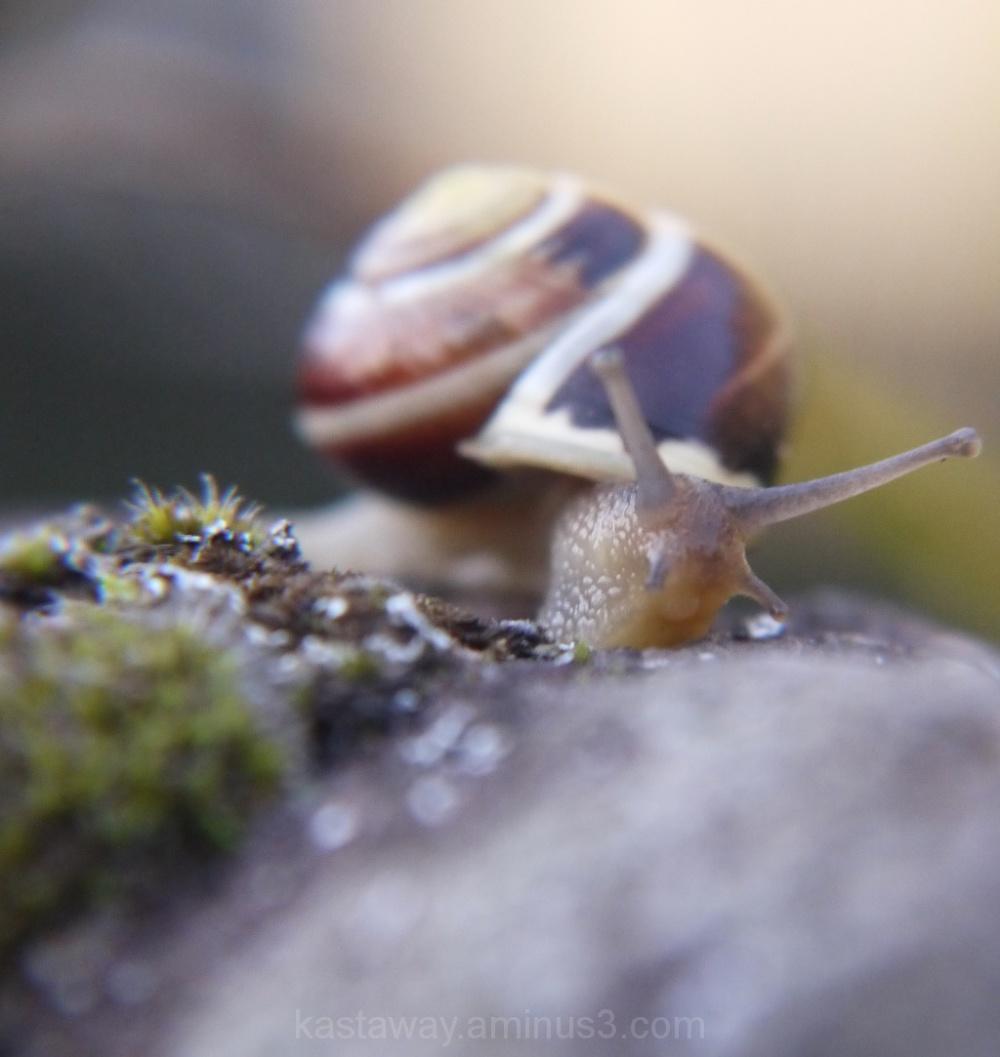 Macro World of Bugs