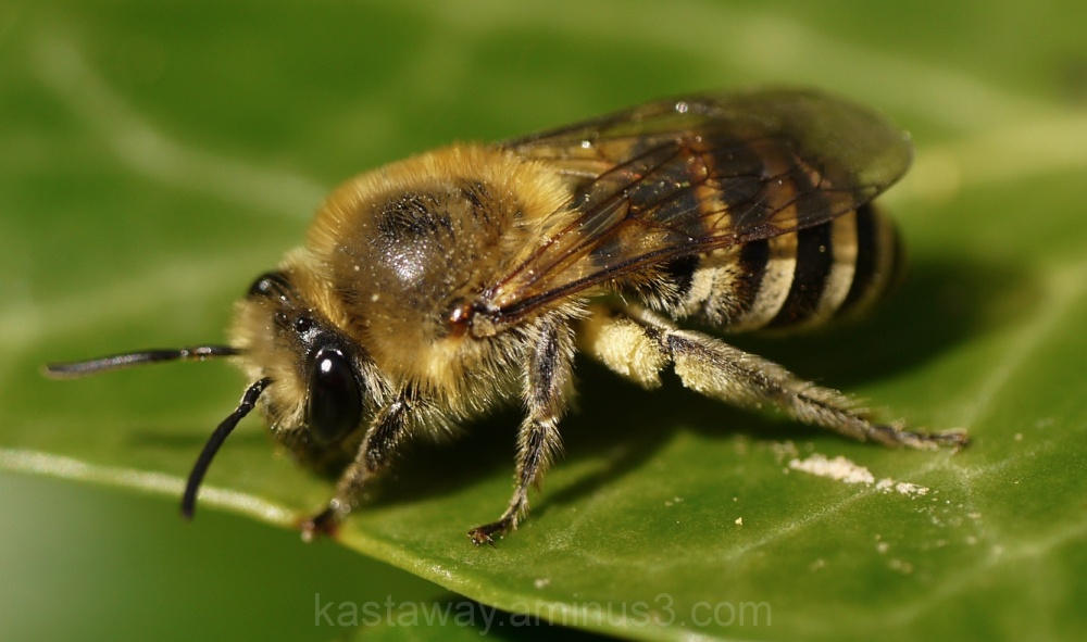 Bee close to me