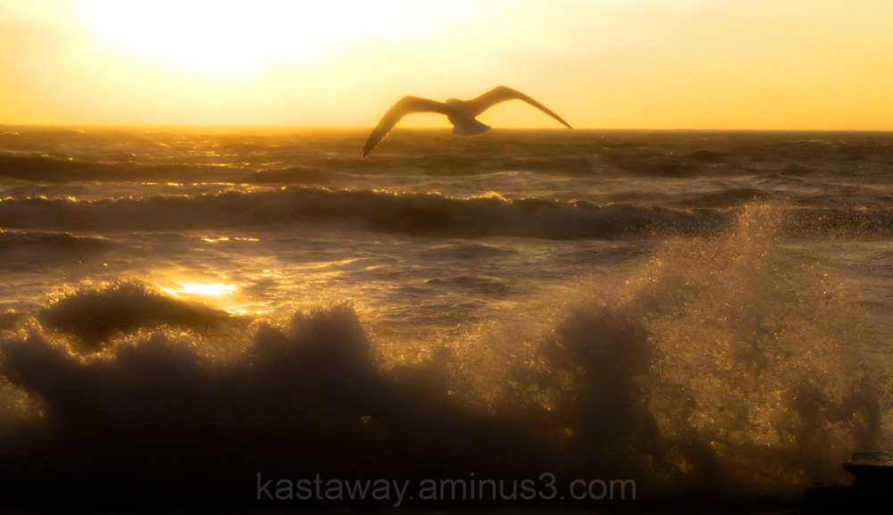 Sea Sunrise Seagul Bird Rflection Dawlish Devon