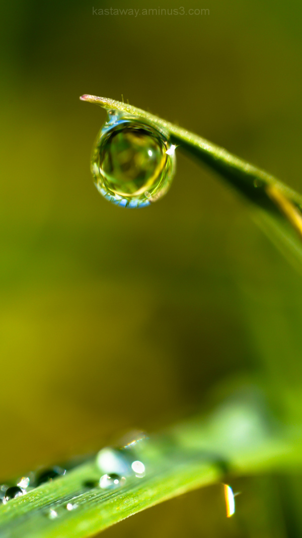 drop dew rain grass reflection sparkle