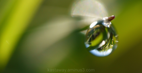 Refracted grass