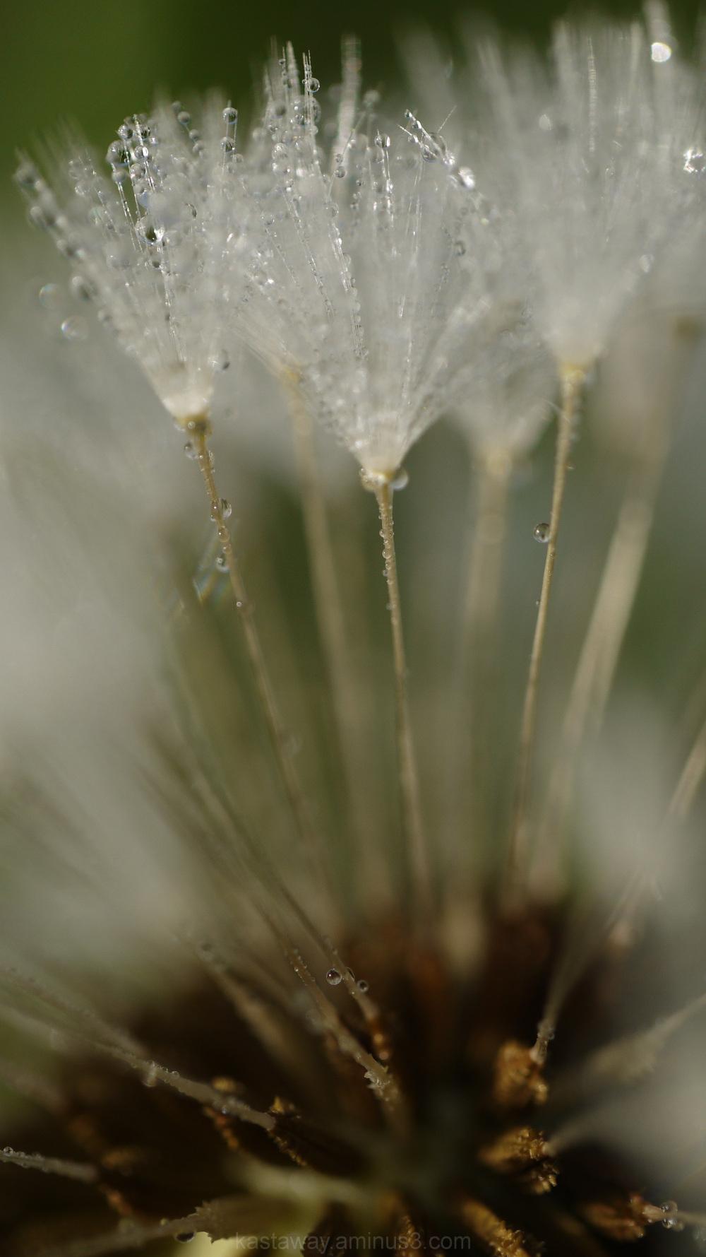 Showery spells