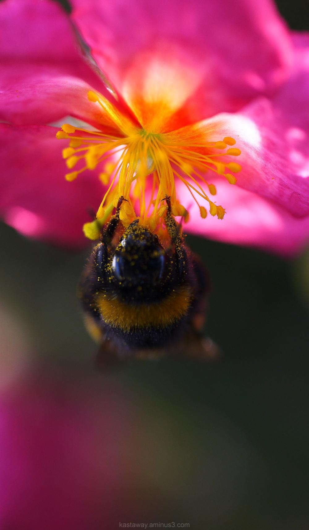 bee flower pink pollen