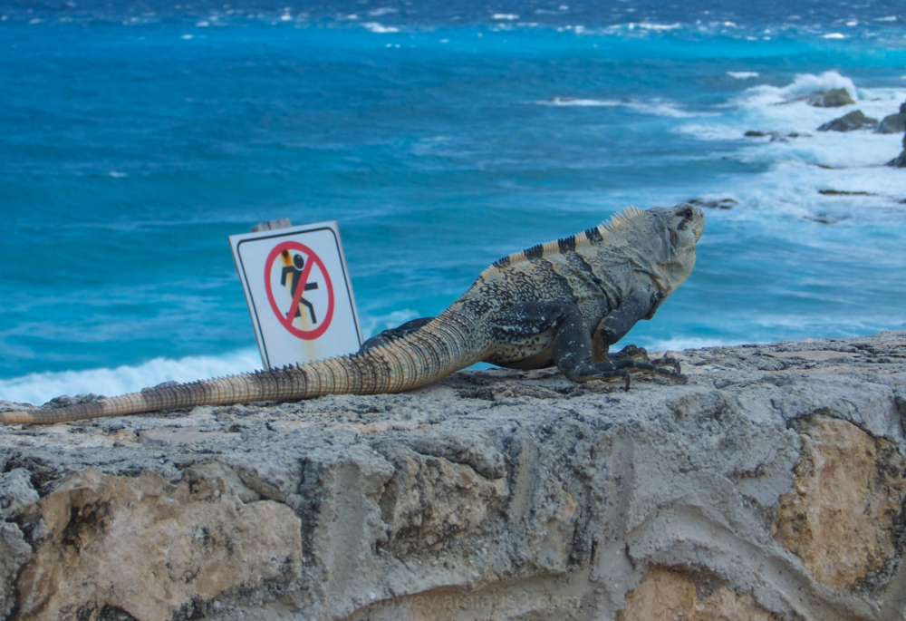 Prohibited!