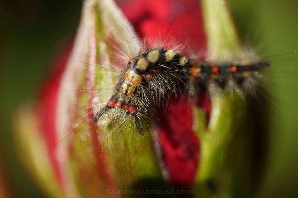 Raindrops on Roses & Whiskers on Kittens ...