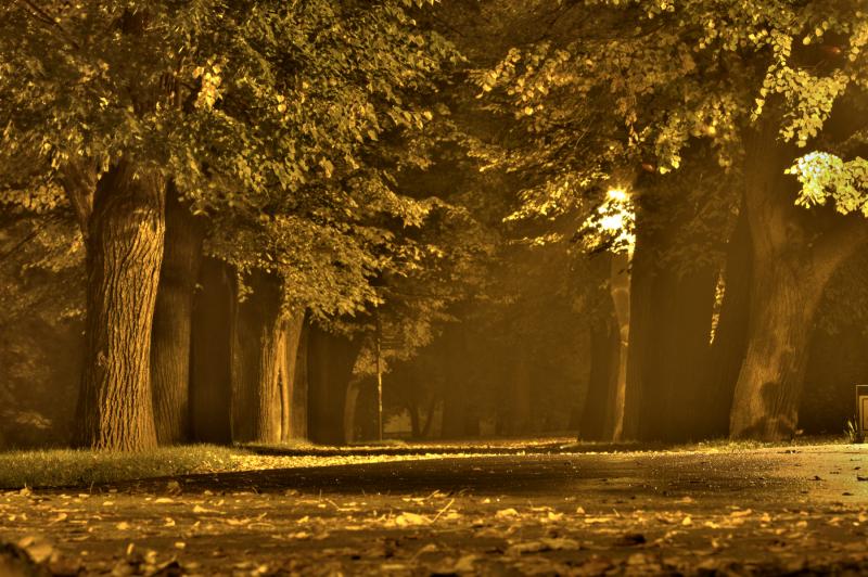 autumn mood in the park