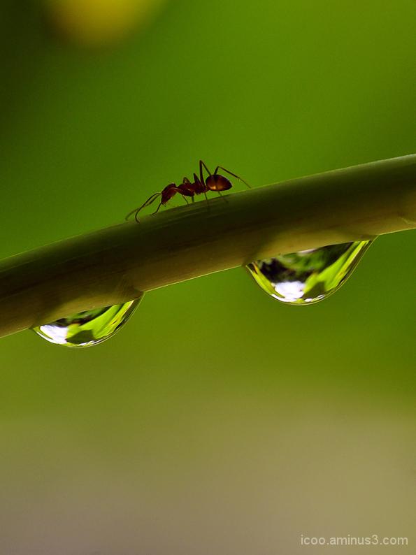 Macro of Ant