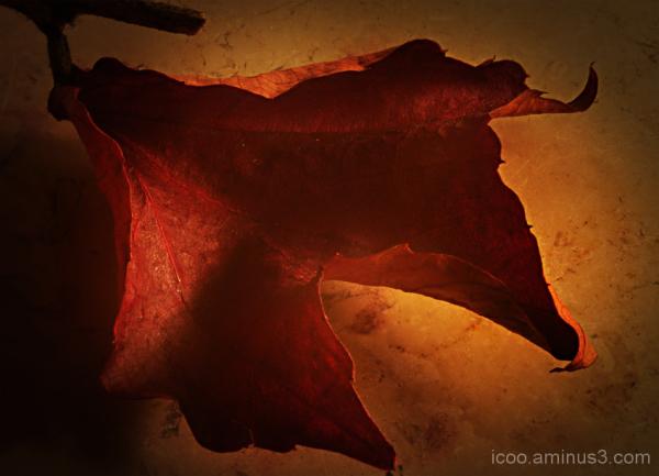 leaf autumn brown