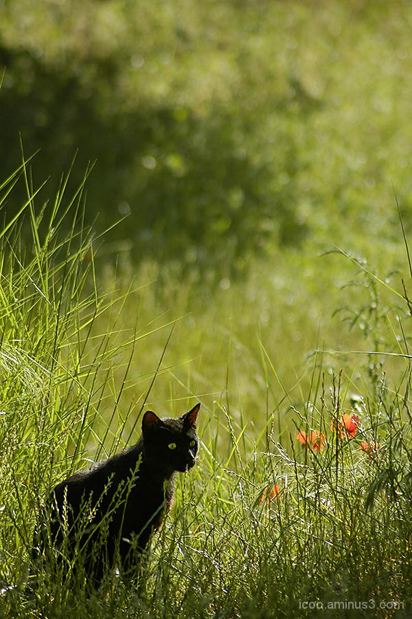 cat flowers garden