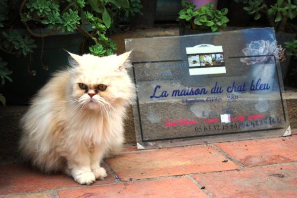 Chat bleu, chat blanc !