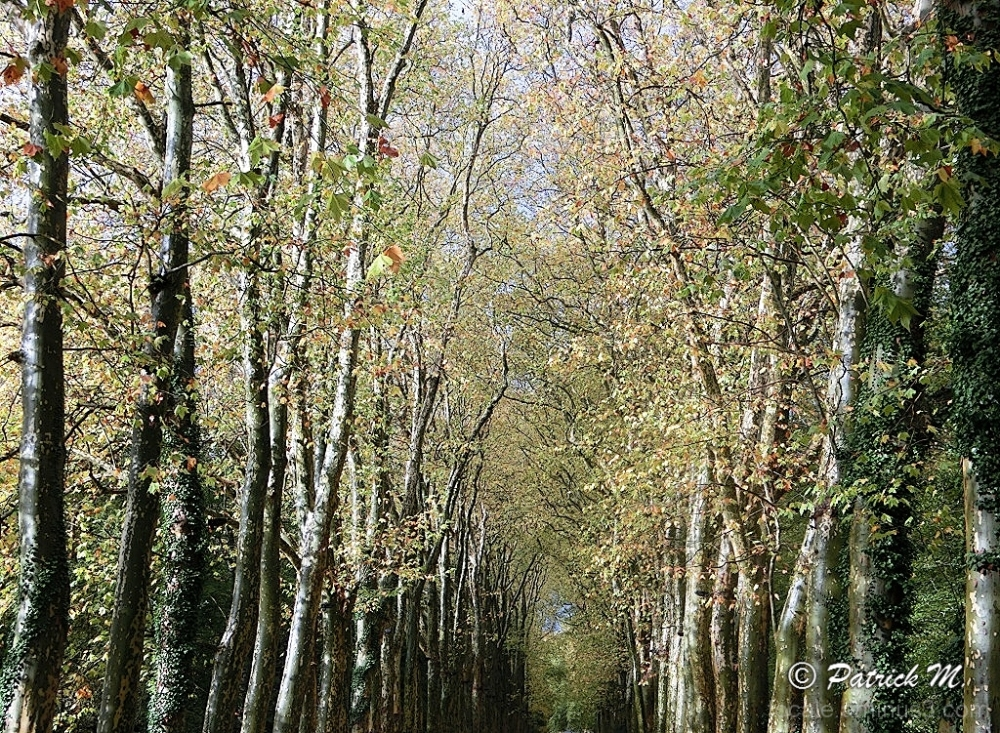 En forêt - Lumiére 1