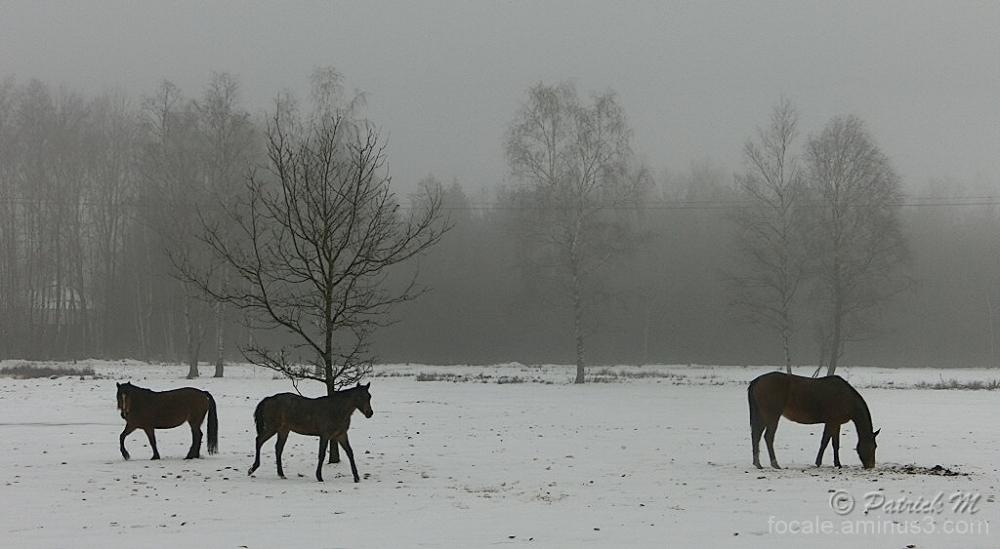 Etalon dans la neige