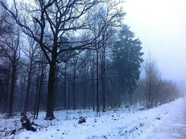 Forêt des Ardennes à la tombée de la nuit