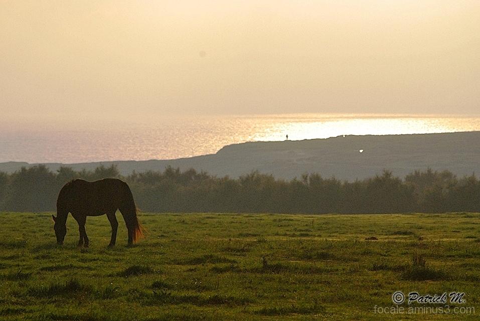 Sunset sur la prairie !