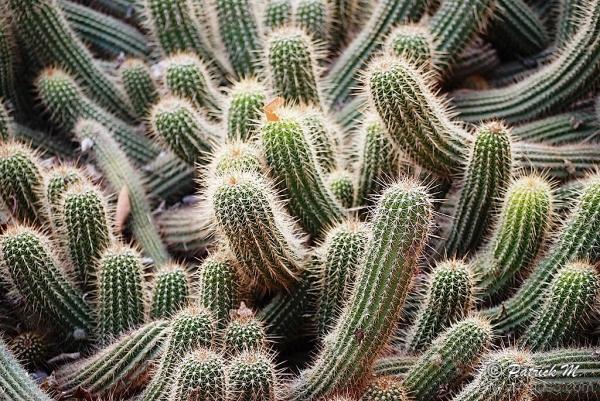 Dans la vie ...!! il y a des cactus !!!