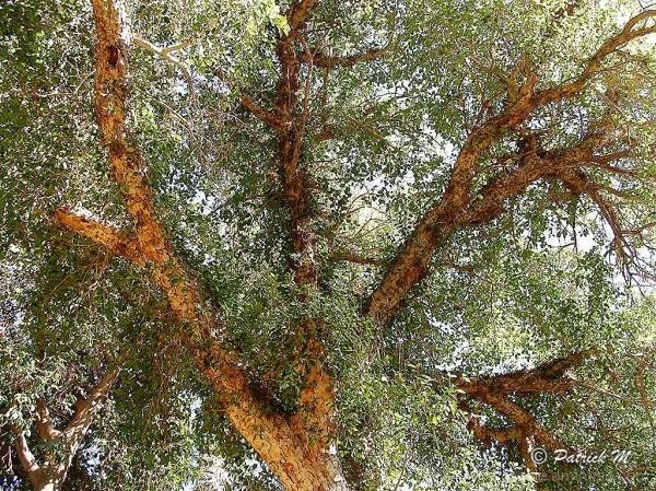 L'arbre de mes 57 printemps