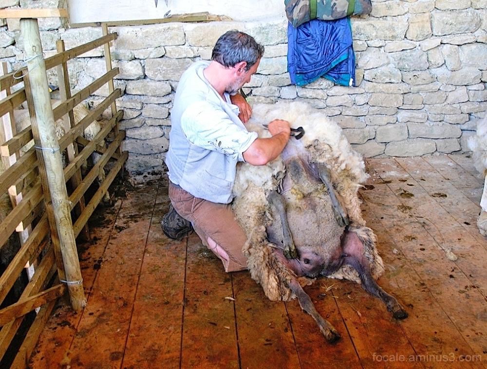 Trop de laine sur le dos
