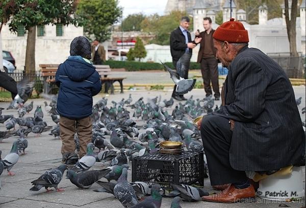 Fais comme l oiseau ........
