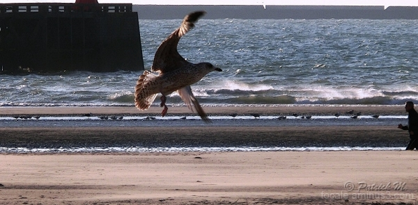 Fais comme l 'oiseau !