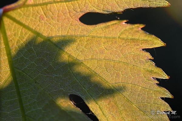 A l' ombre de la vigne ...