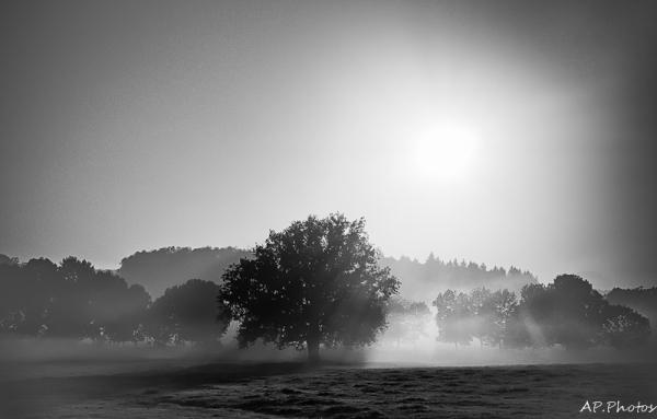 Les vapeurs de l'aube ...