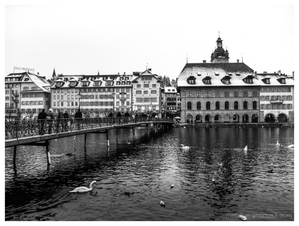 Swans and ducks at Lucerne, Switzerland