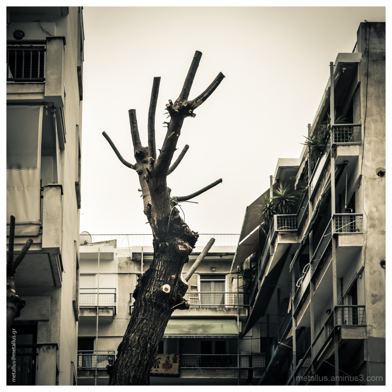 A tree at Thessaloniki, Greece
