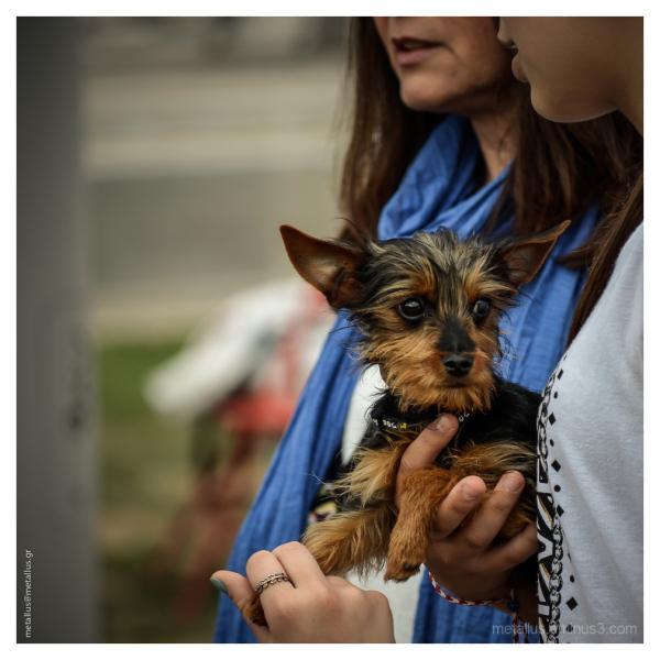 Α little dog