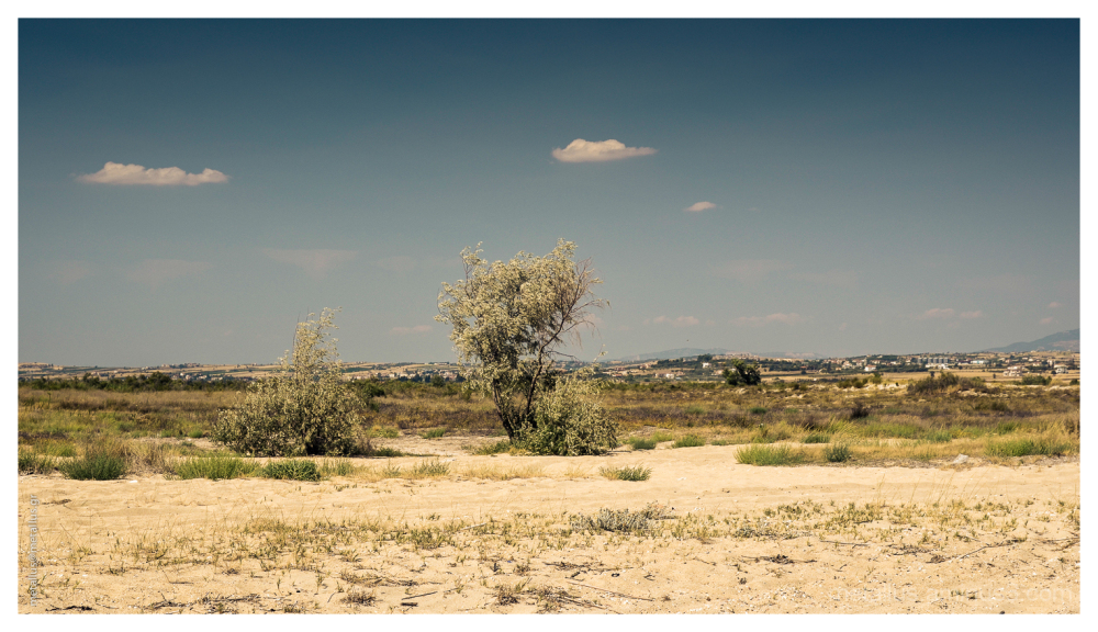A tree at Navagio area, Epanomi, Greece 2013