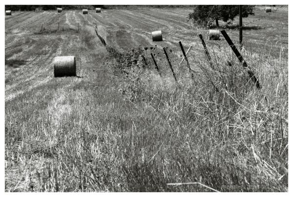 A field at Posidi, Halkidiki, Greece 2013