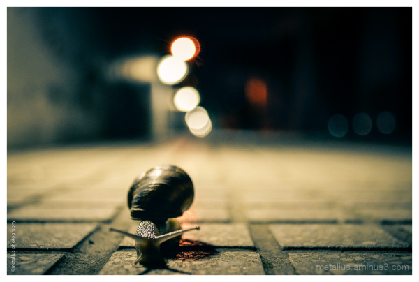 Α snail, Thessaloniki, Greece 2013