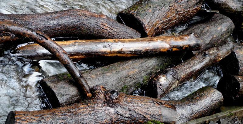 Water Wood