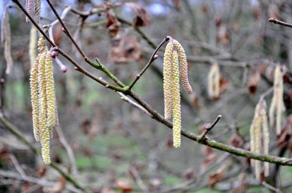 Darling buds of February