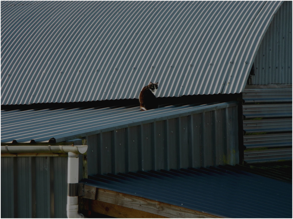 Cat on a cold tin roof.