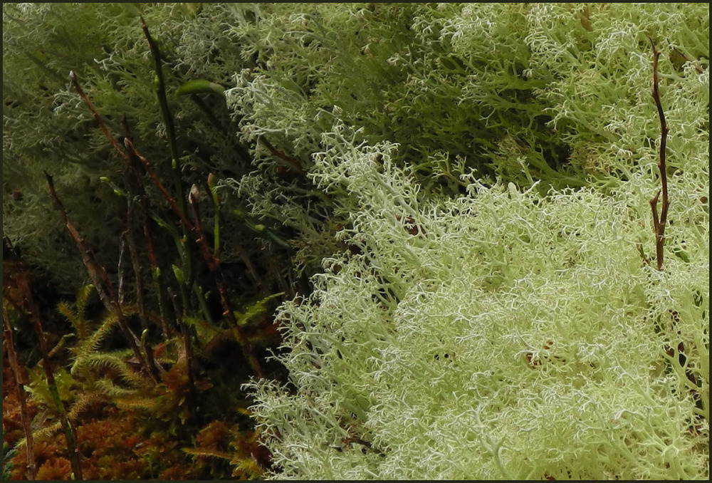 Ferns and Lichen