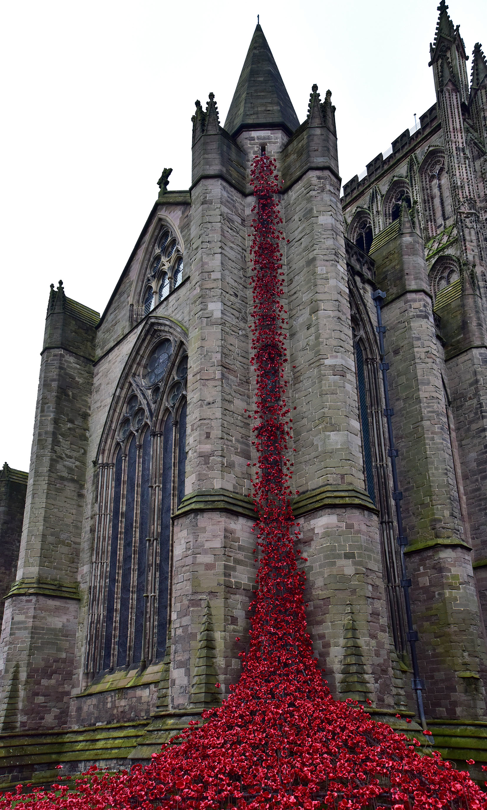 Poppies at Hereford Cathedral