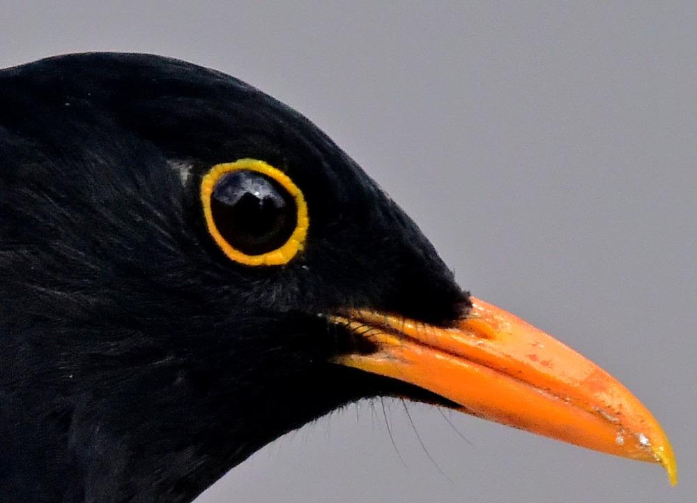 Bird's eye