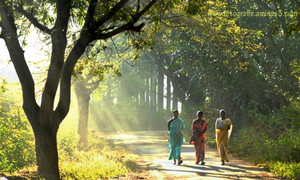 Indian Rural Women, Indian Village women