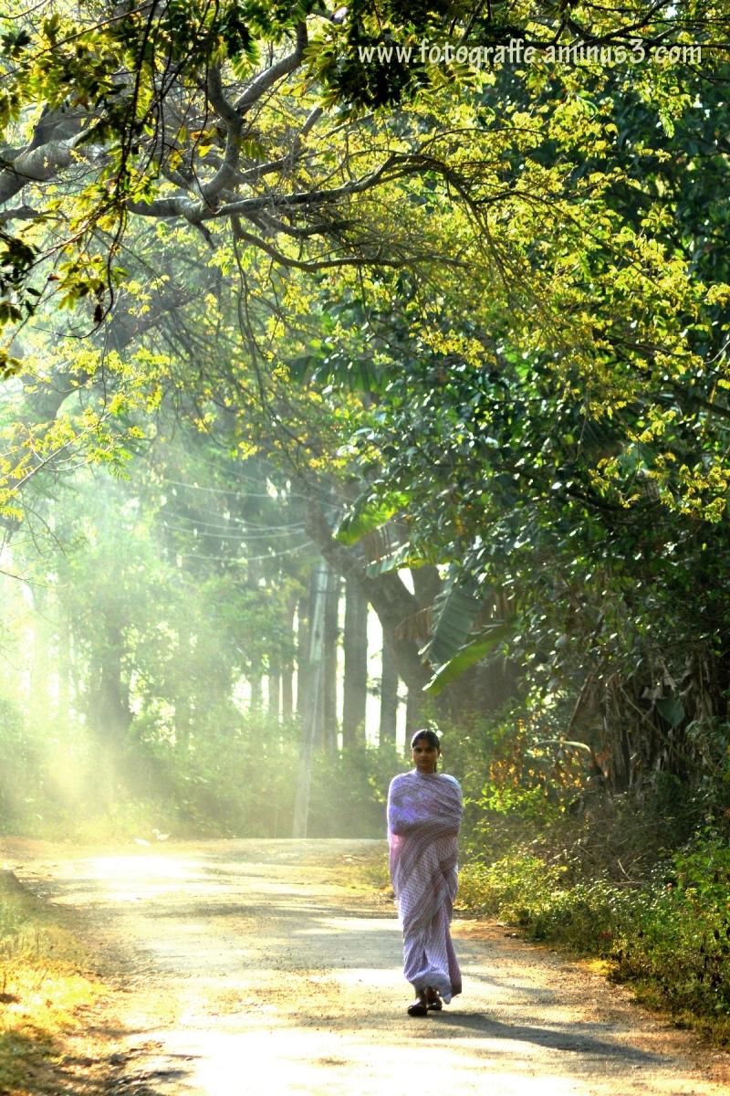På vej til arbejde 2 - Landscape Rural Billeder - Fordi jeg nyder det-9951