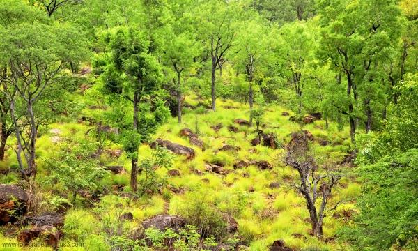 Refreshing Wilderness