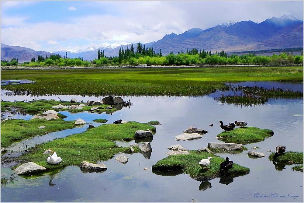 Wetlands Leh Ladakh India
