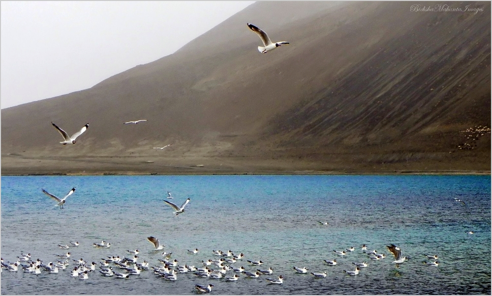 Pangong Lake Ladakh India