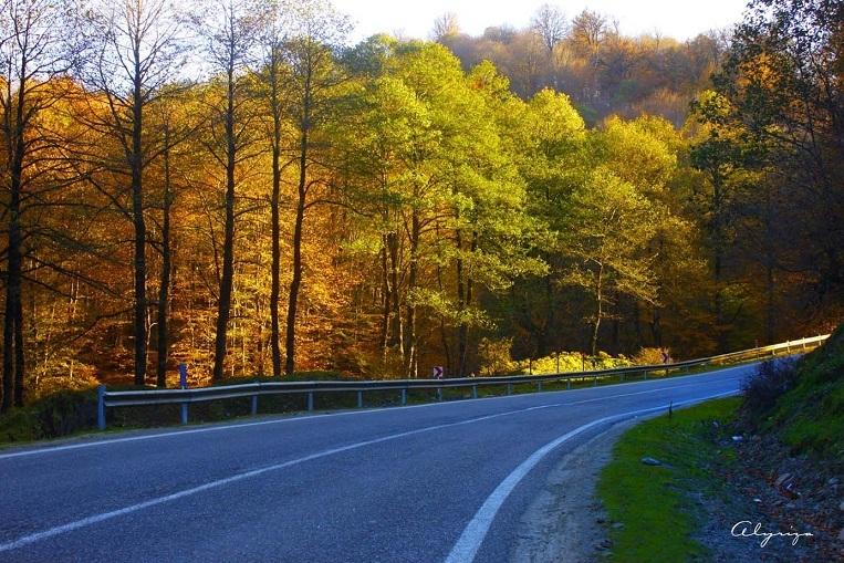 Solitude Road