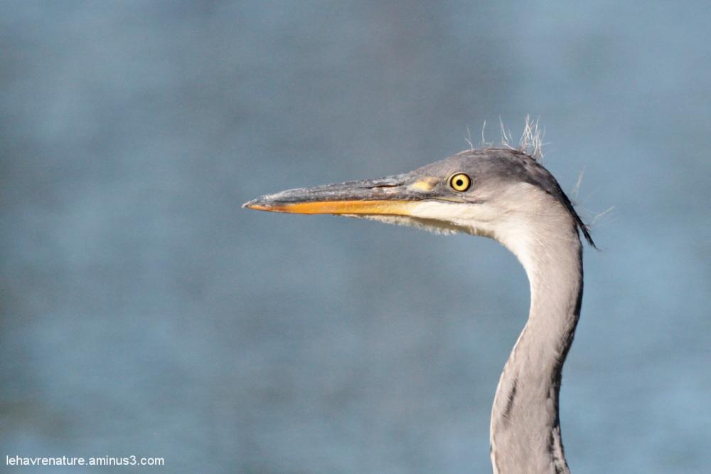 heron    /  heron