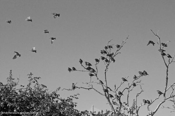 les oiseaux  / the birds