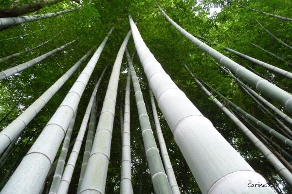 Garden Temple Shoren-in Kyoto Japan Asia