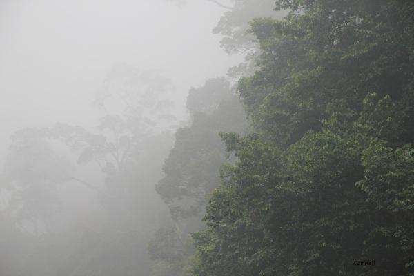 National park Taman Negara Malaysia Asia 3